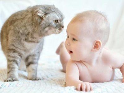 Аллергия на кошек у грудничка